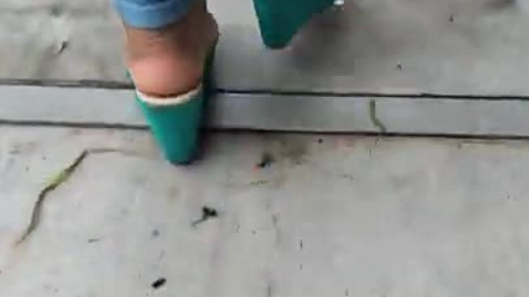 Blue wedges flapping