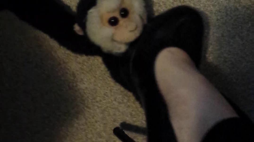 Pet Crushing in Heels